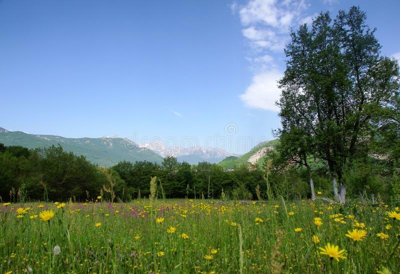 Scena rurale tranquilla con il prato e le montagne fotografia stock