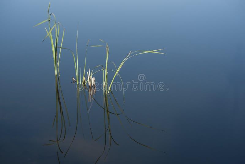 Scena serena. fotografia stock