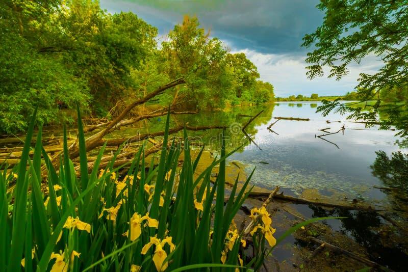 Scena serena con i fiori ed il lago fotografie stock libere da diritti