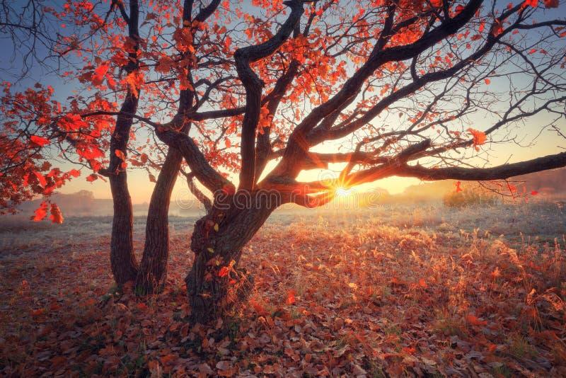 Scena soleggiata di autunno fotografia stock