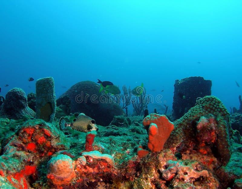 Scena subacquea fotografie stock libere da diritti