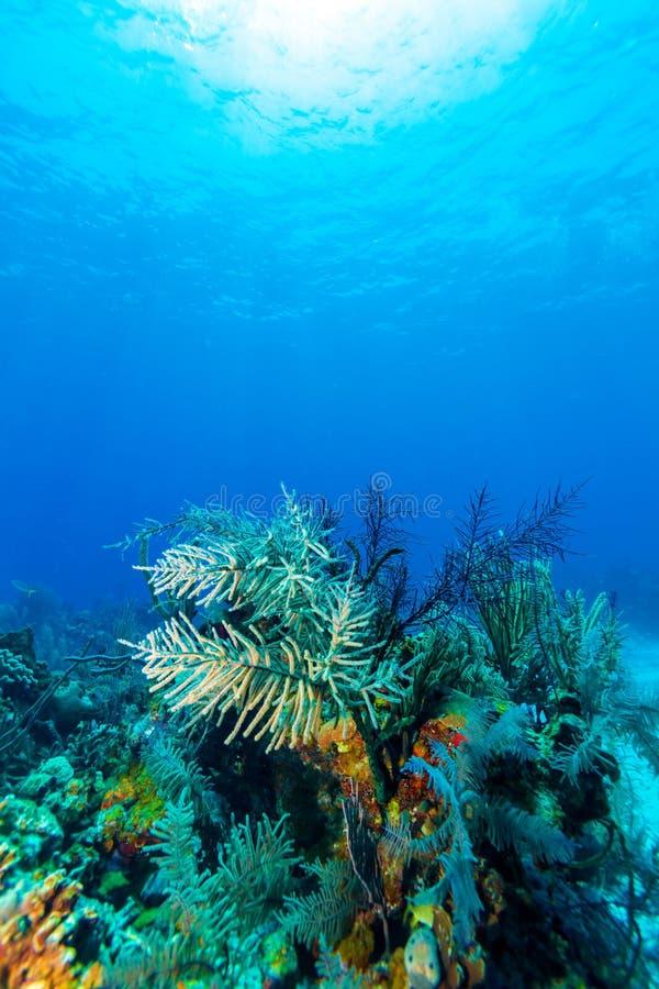 Scena subacquea con i coralli variopinti e la bella luce solare fotografia stock libera da diritti