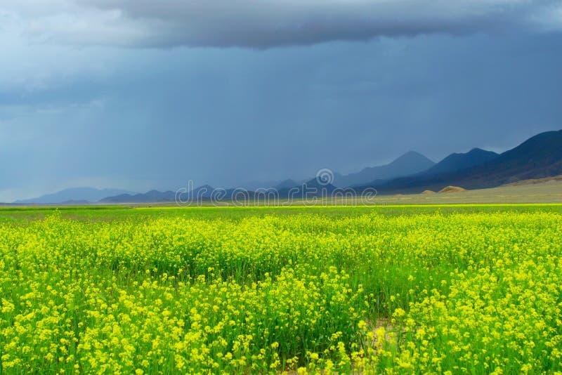 scena Tibet zdjęcia stock