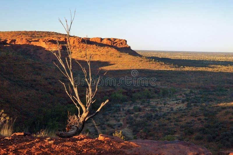 Scena tipica dell'australiano Outback (Canyon del re) fotografia stock libera da diritti
