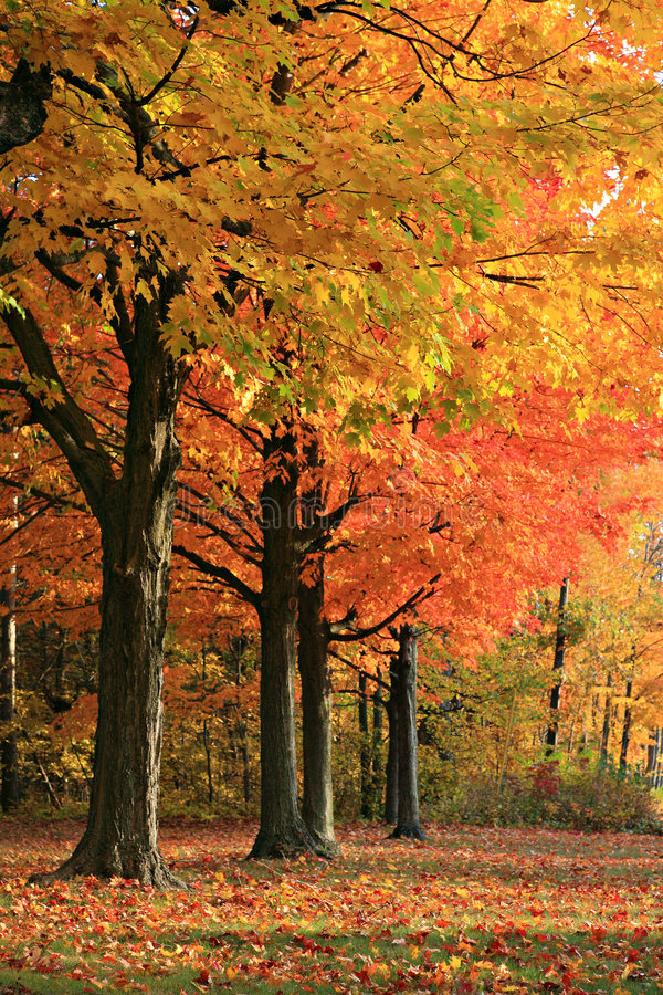 Scena variopinta di autunno fotografie stock