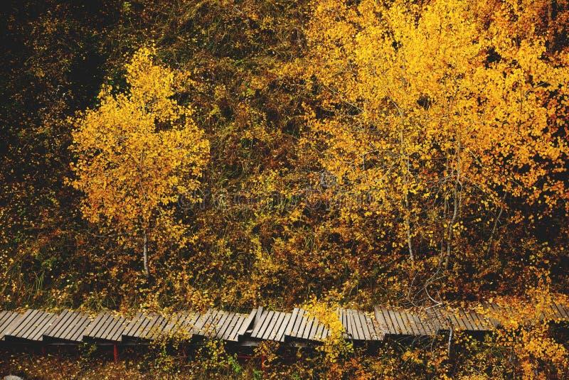 Scena vibrante romantica di autunno e fondo di camminata dell'itinerario, saturati caduta gialla della foglia, umore solo e tono, fotografia stock libera da diritti