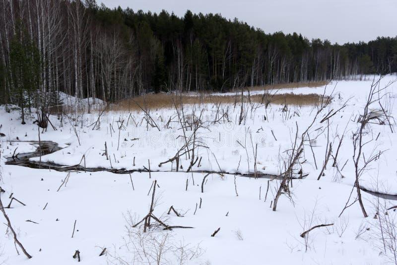 Scenary julsagasnö Hillocky fält eller träsk Övervintra det molniga landskapet med snö på jordningen och glasera på vasser arkivbilder