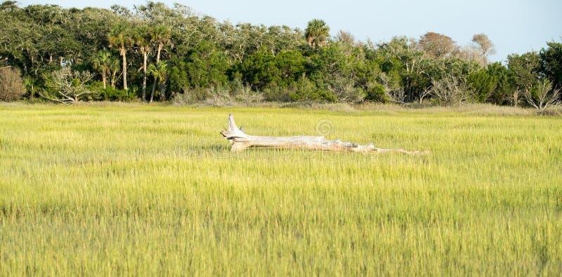 Scene alla piantagione della baia di botanica vicino a Charleston Carolina del Sud immagini stock