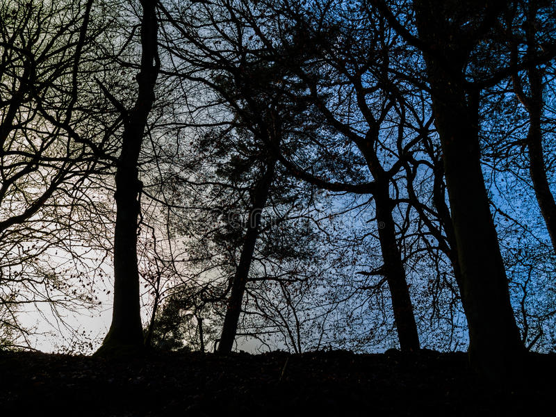 Download Scene with Backlit Tree stock photo. Image of tree, vibrant - 83700094