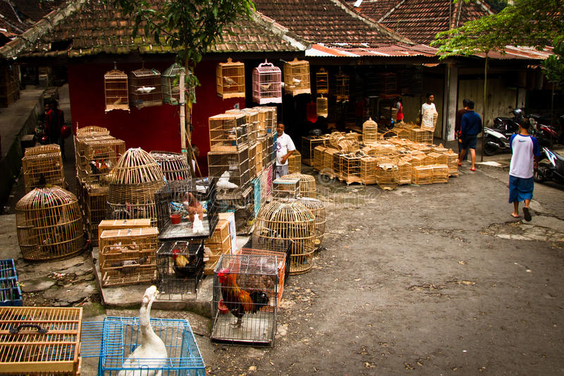 Scene of the bird markets of Malang, Indonesia. The Bird Markets of Malang, Indonesia royalty free stock photo