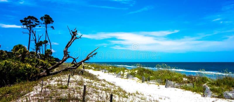 Scene della natura intorno all'isola Carolina del Sud di caccia fotografia stock libera da diritti