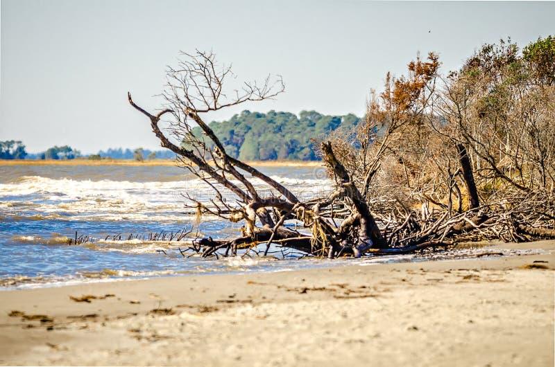 Scene della spiaggia intorno alla spiaggia Carolina del Sud di follia immagini stock libere da diritti