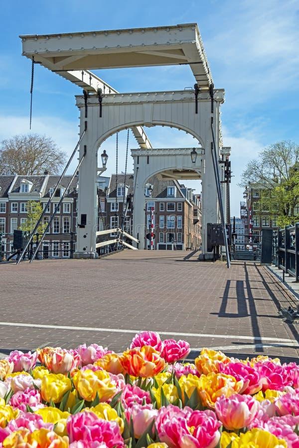 Scene di Amsterdam in primavera al ponte Tiny, Paesi Bassi fotografia stock libera da diritti