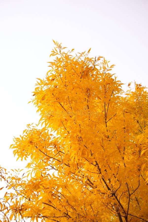 Scene di caduta ad ottobre immagini stock