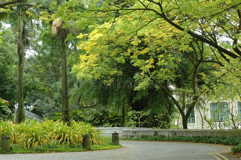 Scene - Fort Canning Hill. Leaves of the trees at Fort Canning Park turning yellow stock images