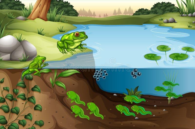 Scene of frogs in a pond. Illustration vector illustration
