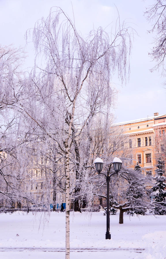 Download Scene With Frosted Trees In City Park Stock Photo - Image: 83709350