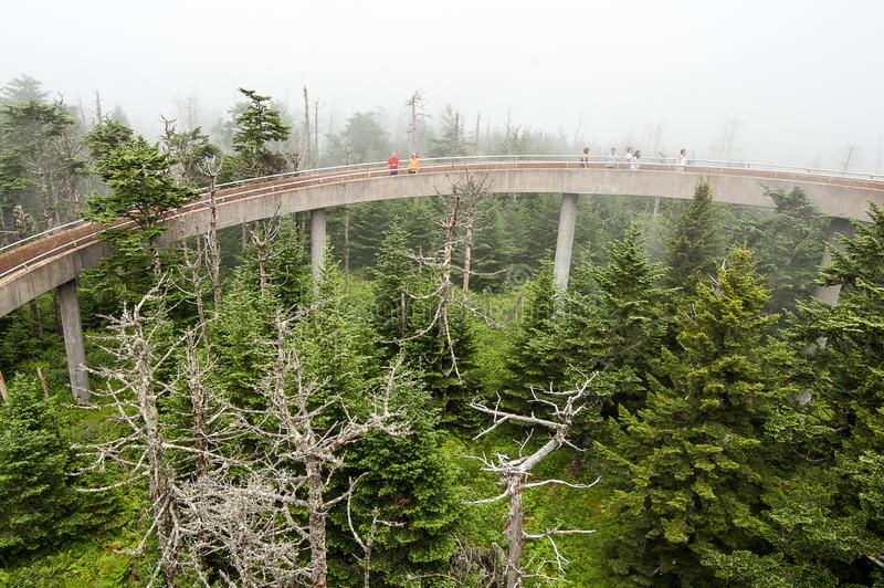 Scene from Great Smokey Mountains at Clingman`s Dome royalty free stock image