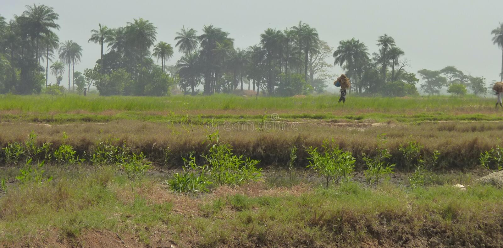 Scene from Guinea-Bissau. Rural Scene from Guinea-Bissau, Africa royalty free stock photo