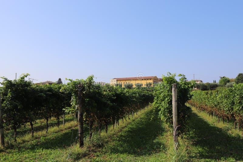 ITALY, VENETO, VERONA, BARDOLINO - SEPTEMBER 16, 2019: Vinyards and building of the winery `Zeni` in Bardolino. Scene in Italy on a day in September 2019 royalty free stock photo