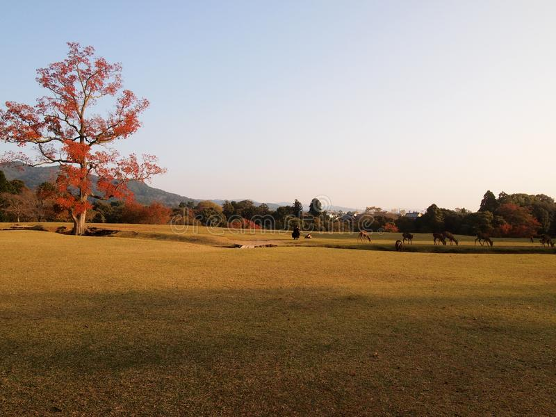 Scene of Nara Public park in Autumn in Japan royalty free stock photography