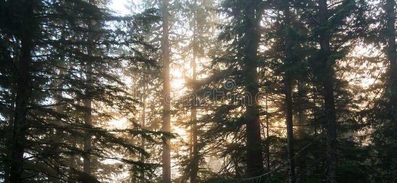 Scene of road to mt Baker on the morning,Washington,USA. royalty free stock image