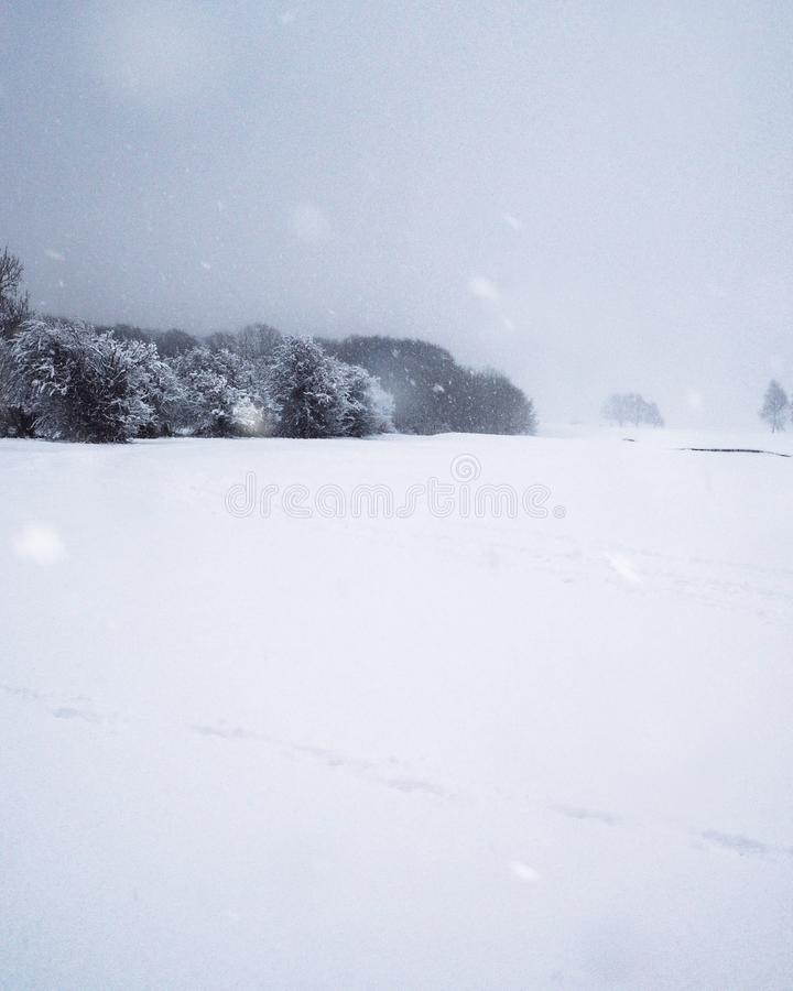 Snow fallen upon a woodland edge stock photography