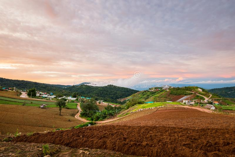 The Scene of Thailand about Big Cabbage farm on the mountain, Phu Tubburk, Thailand royalty free stock photo