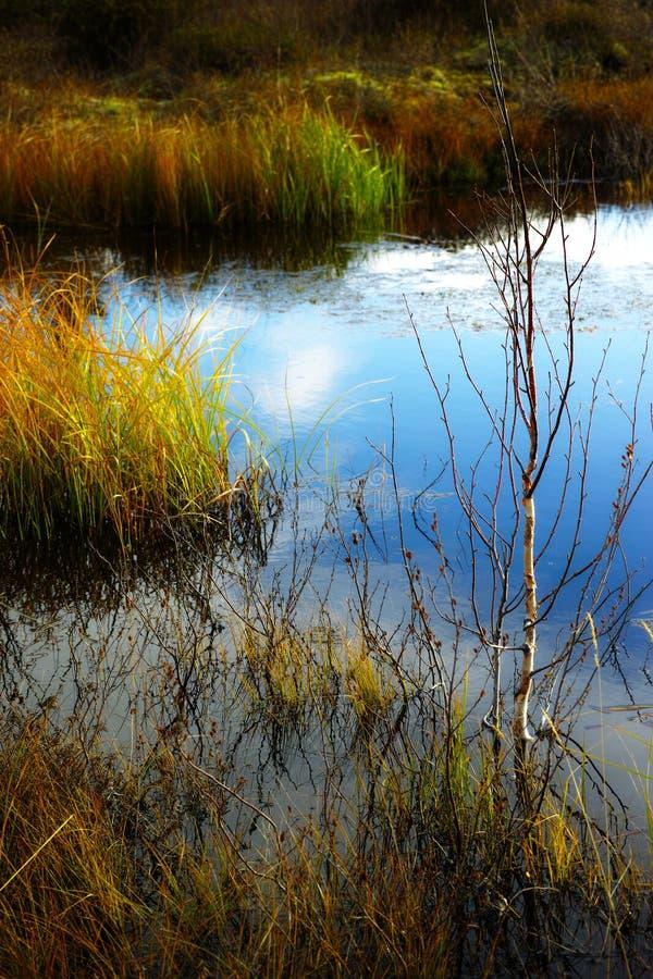 Scene with tundra lake. Yamal royalty free stock photos