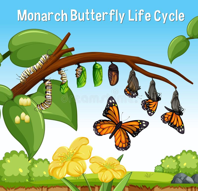 Free Scene With Monarch Butterfly Life Cycle Royalty Free Stock Image - 209059796