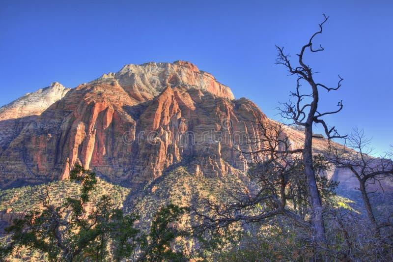 Scene in Zion National Park, Utah royalty free stock photo