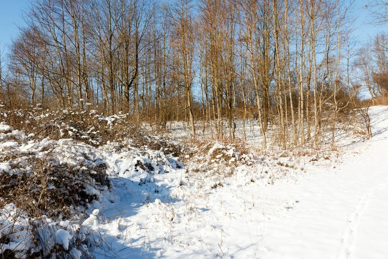 Sceneggiatura dei boschi d'inverno con sentiero, neve e sfondo blu fotografia stock libera da diritti