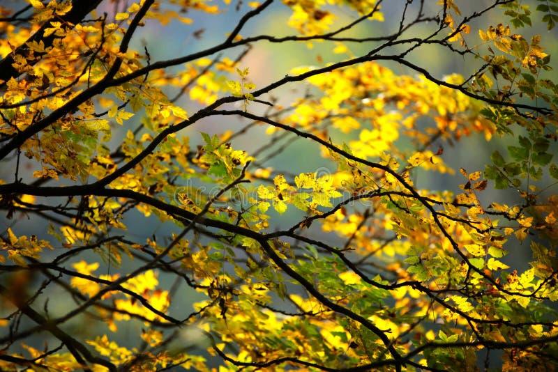 Sceneria Guanegou lasu państwowego park w Porcelanowym ` s Gansu zdjęcia stock