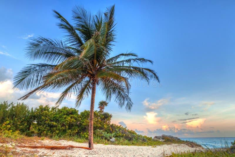 Sceneria morza karaibskiego wybrzeże blisko playa del carmen przy zmierzchem, Meksyk zdjęcie royalty free