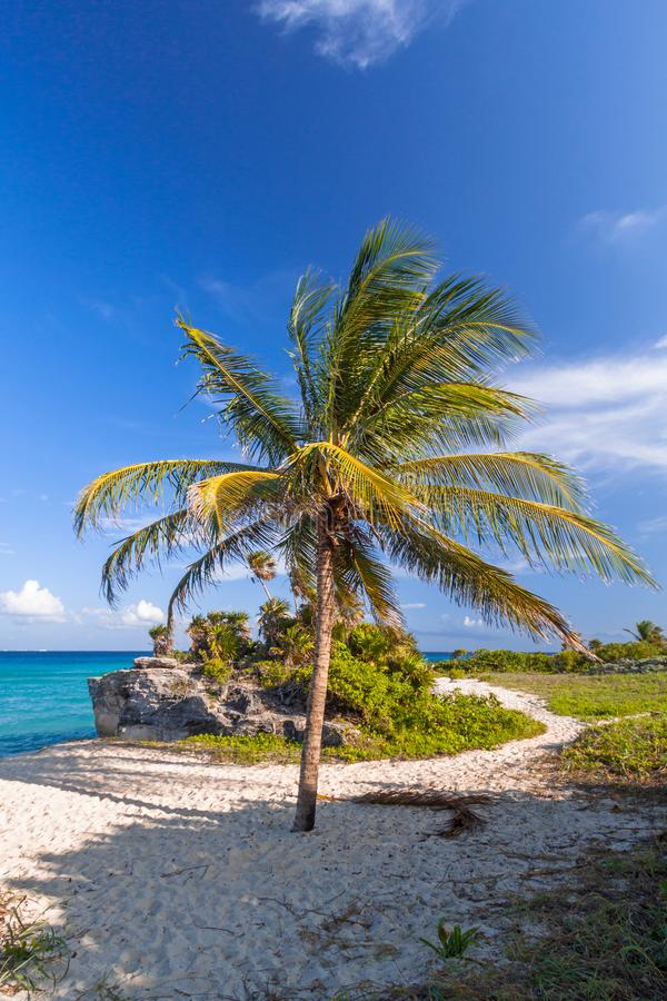 Sceneria morza karaibskiego wybrzeże blisko playa del carmen przy zmierzchem, Meksyk zdjęcie stock