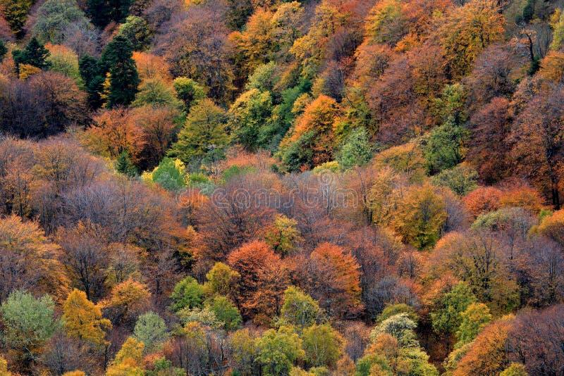 sceneria mountain zdjęcia stock