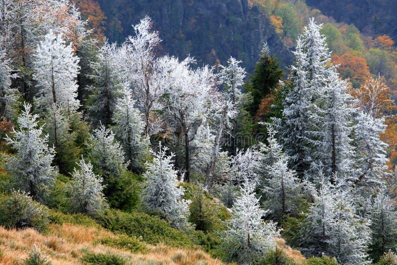 sceneria mountain zdjęcie stock