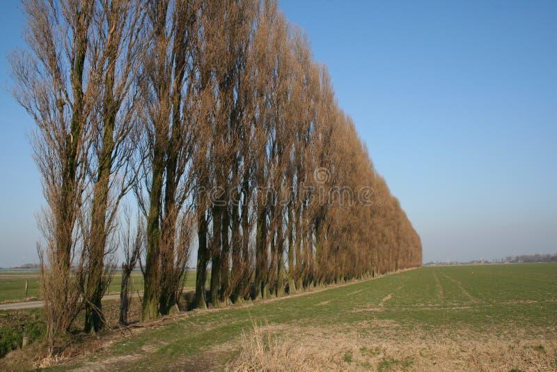 sceneria niderlandzkiej obraz royalty free