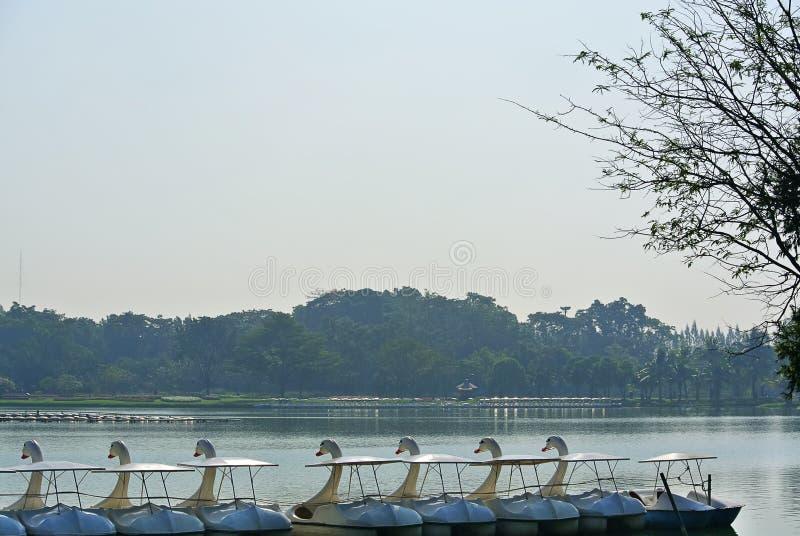 Sceneria rząd łabędź następu łodzie na jeziorze obraz stock