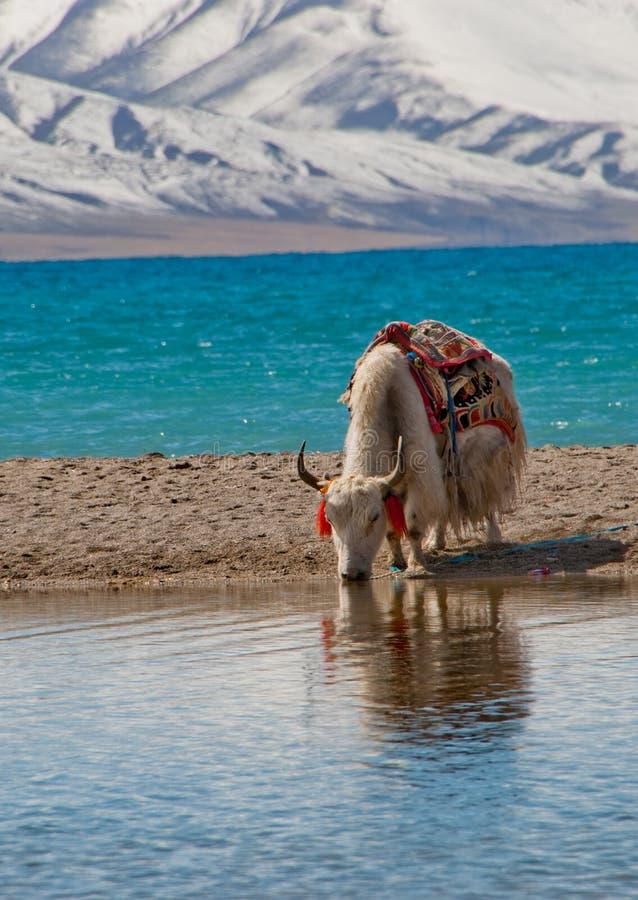 sceneria Tibet obraz royalty free