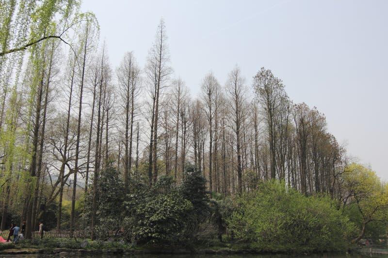 Sceneria w Zachodnim jeziorze, Hangzhou, Chiny 01 obrazy stock