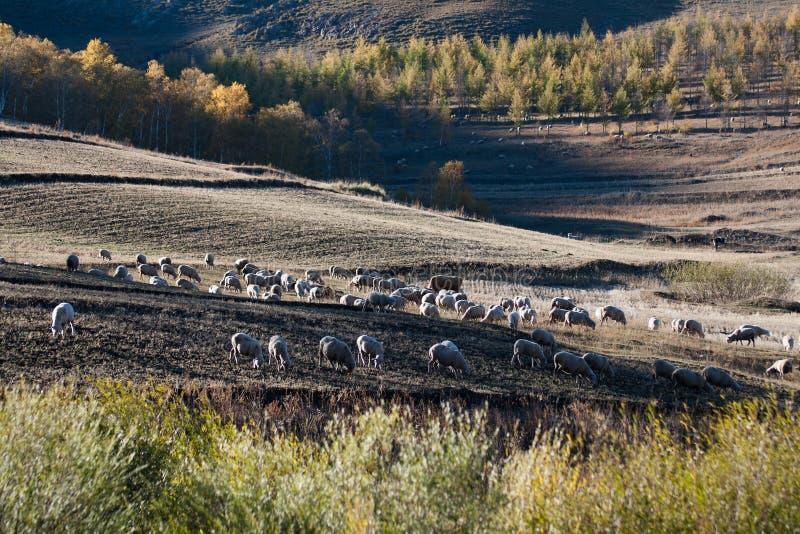 Sceneria Wewnętrzna Mongolia preria fotografia royalty free