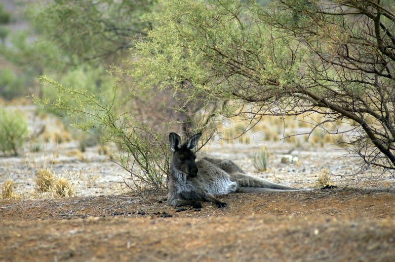 Sceneria wzdłuż Moralana Scenicznej przejażdżki, Flinders pasma, SA, Australia obraz stock