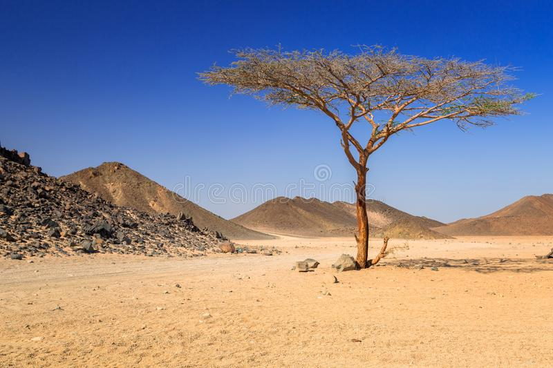 Scenery of the african desert stock photography