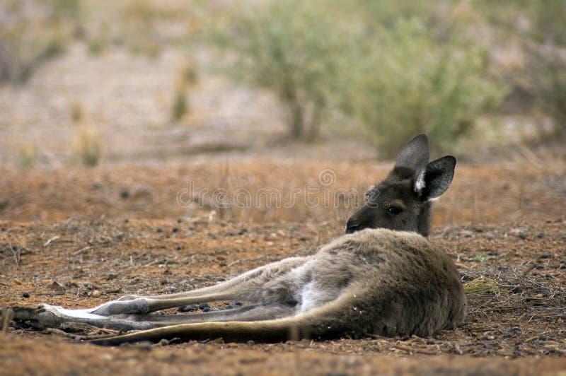 Scenery along Moralana Scenic Drive, Flinders` Ranges, SA, Australia royalty free stock photos