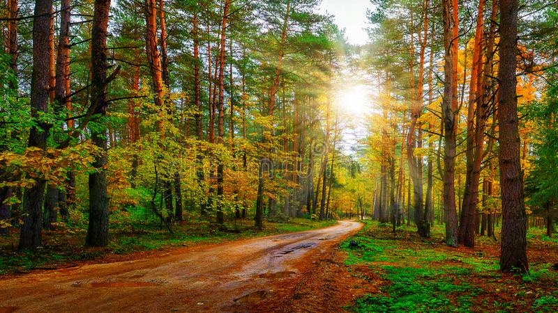 Scenery autumn forest on bright sunny day. Road in colorful woodland. Sunbeams in autumn forest. royalty free stock photography