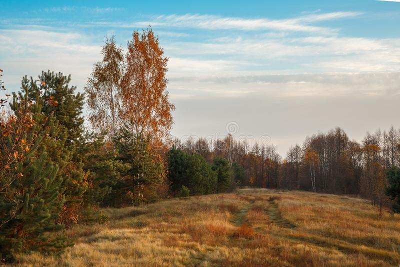Scenery autumn forest. October nature landscape. Beautiful bright forest in sunlight royalty free stock photos