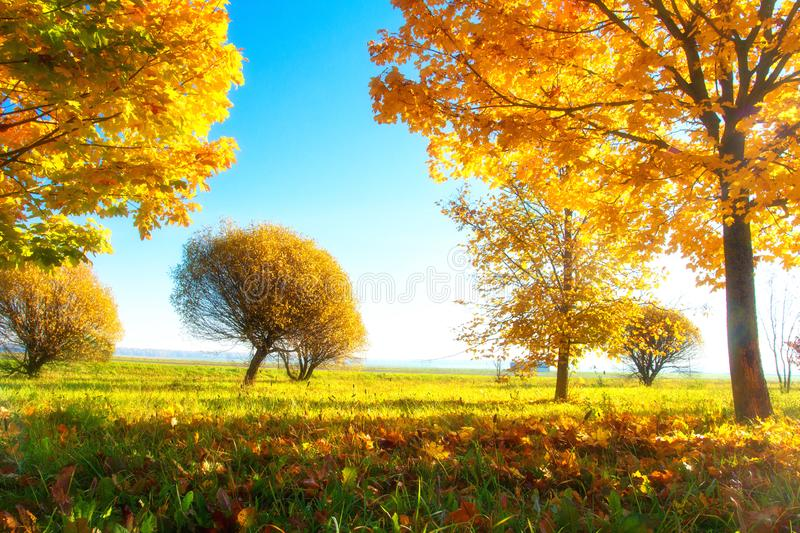 Scenery autumn. Sunny autumn day. Colorful nature landscape in autumn season. Yellow trees in morning sunlight. Autumn scene with. Fall. Scenery autumn. Sunny royalty free stock images