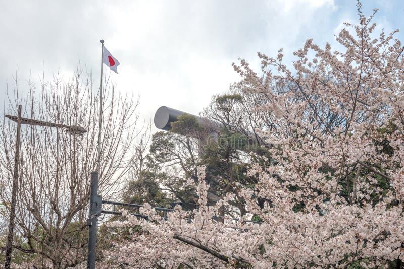 The scenery of blooming sakura in Chidorigafuchi park in Tokyo, Japan.  stock photography