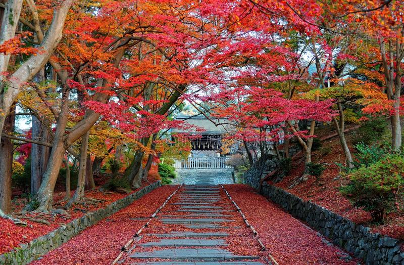 Scenery of fiery maple trees at entrance Sandou to Bishamon Hall Bishamondo, a famous Buddhist temple stock images